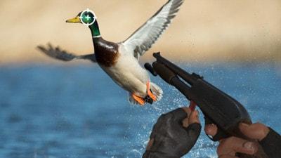 野外猎鸭模拟器截图3