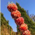 冬天的第一根糖葫芦图片