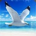 海鸥模拟器
